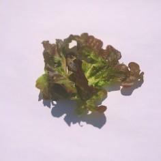 有機野菜を使ったケータリングなら福岡のバッサケータリング&デリ